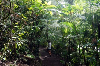 Costa Rica: Arenal 1968 Wanderung