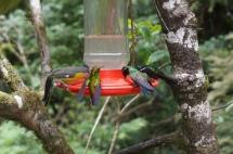 Costa Rica: Kolibris Monteverde