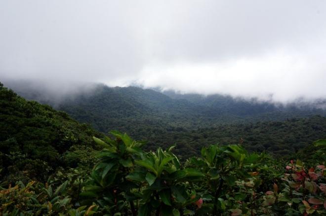 Costa Rica: Monteverde Cloud Forest