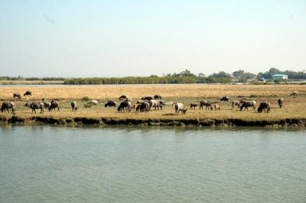 Myanmar Fähre von Sittwe nach Mrauk U Felder