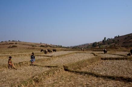 Myanmar Kalaw Trekking Feldern