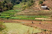 Myanmar Kalaw Trekking vorbei an Feldern