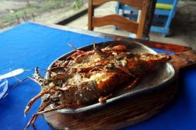 Nicaragua: Languste