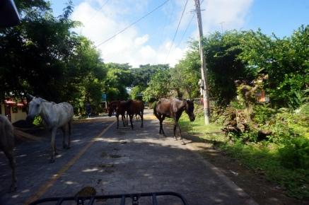 Nicaragua: Ometepe mit dem Quad unterwegs