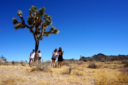 USA_Joshua Tree Nationalpark