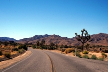 USA: Joshua Tree Nationalpark