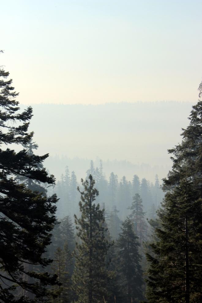 USA_Yosemite Bäume