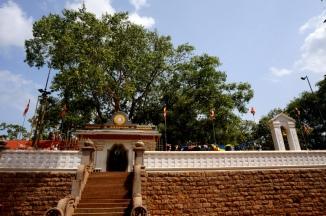 Sri Lanka Anuradhapura Sri Maha Bodhi