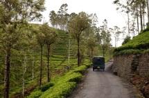 Sri Lanka Liptopns Seat TukTuk