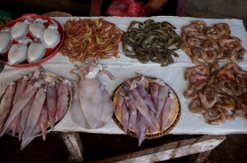 Sri Lanka Negombo Fisch