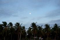 Sri Lanka Nilaveli Palmen