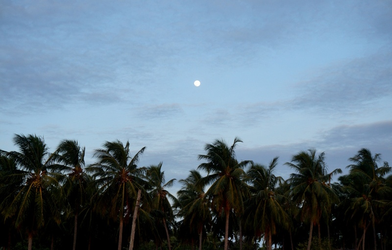 Sri Lanka – Alles was du wissenmusst
