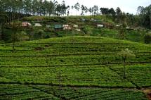 Sri Lanka Weg von Liptopns Seat