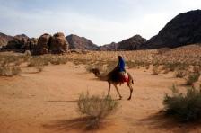 4 Tage Kamelreiten