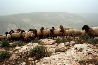 Tag 1 Unterwegs trifft man immer wieder auf Hirten mit ihren Herden