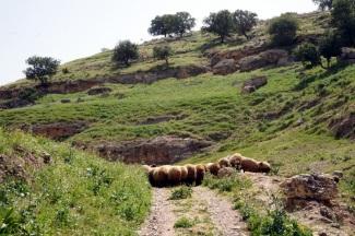 Tag 3 Manchmal versperren Schafe den Weg