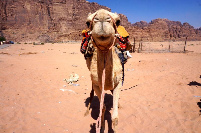 Jordanien – Auf Kamelen durch das WadiRum