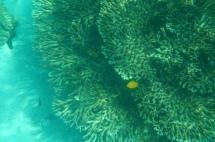 Daymaniyat Island Fisch