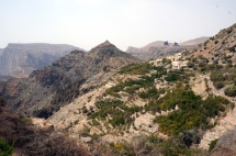 Plantagen Jabal Akhdar